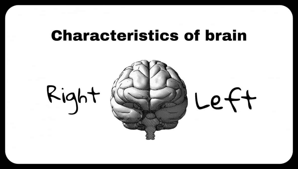Here are some more characteristics of the left and right brain: Left Hemisphere (Masculine) Right Hemisphere (Feminine) Cause and effect Holistic perception Words / Language Intuition Facts Creativity Symbols Randomness Numbers Imagination Reality-centered Insight Objective Day-dreaming Black & White Images Pattern User Fantasy-centered Sequence Emotional Order Colors The division of the brain into masculine and feminine has been used in philosophy and psychology for many years. According to Carl Jung, consciousness is occupied by the same sex. Whereas the unconsciousness is occupied by its opposite equivalent (named anima/animus). Some theories categorize right and left spheres of the brain into consciousness and unconsciousness. According to research, left hemisphere is considered conscious (reason). Whereas the right part of the brain is considered unconscious (intuition). Yet, such theories lack the essential evidence to recognize them to be true.